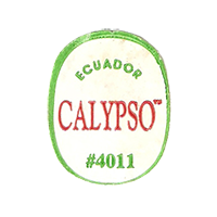 CALYPSO #4011  22,1 x 27,7 mm paper before 2012 Ecuador unique