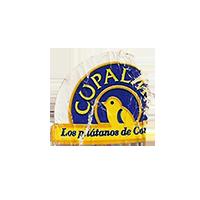 CUPALMA Los platanos de Canarias  19,5 x 18,1 mm paper before 2012 M Spain unique